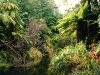 Urwald am Lake Waikaremoana, Te Urewera Nationalpark, Nordinsel,  Neuseeland