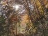 Wanderweg durch den Herbstwald im Nationalpark Berchtesgaden, Bayern, Deutschland