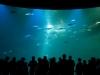 Das grosse Aquarium im Ozeaneum Stralsund, Ostsee, Deutschland