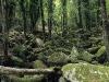 Wald am Monte Capanne, Elba, Toskana, Italien