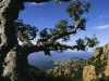 Wanderung am Cap Roux, Cote d\'Or im Estérel-Massif, Cote d\'Azur, Frankreich
