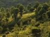 Waldzone im Estérel-Massif, Cote d\'Azur, Frankreich