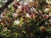 Blätterdach aus Wein, Locanda San Vigilio, Gardasee, Italien