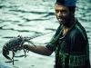 Fangfrische Languste auf Fogo, Kapverdische Inseln