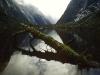 Milford Track, Fjordland, Neuseeland