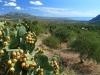 Blick von Dorgali nach Orosei, Baronia, Sardinien, Italien