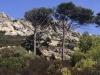 Granitfelsen, Macchia und Pinien bestimmen das schroffe Bilde der Insel Caprera, Sardinien, Italien