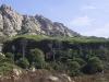 Pineta auf Caprera in der Inselgruppe La Maddalena auf Sardinien, Italien
