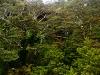 Bergregenwald am Ruapehu,  Tongariro Nationalpark, Nordinsel Neuseeland