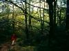 Bergwald nahe der Waihohonu-Hütte, Tongariro Nationalpark, Nordinsel Neuseeland