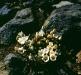 Pflanzen im Tongariro Nationalpark, Nordinsel Neuseeland