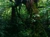 Mischregenwald im Tongariro Nationalpark, Nordinsel Neuseeland