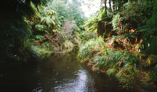 Urwald Lake Waikaremoana, Te Urewera Nationalpark Neuseeland