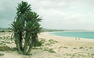 Strand Praia de Chave auf Boavista, Kapverden