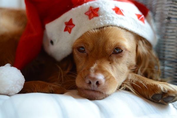 Cody wünscht frohe Weihnachten