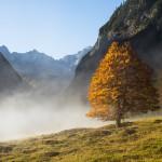 Herbstwald auf dem großen Ahornboden, Karwendel, Tirol, Österreich