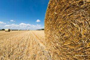 Strohballen auf einem abgemähten Getreidefeld in Bayern