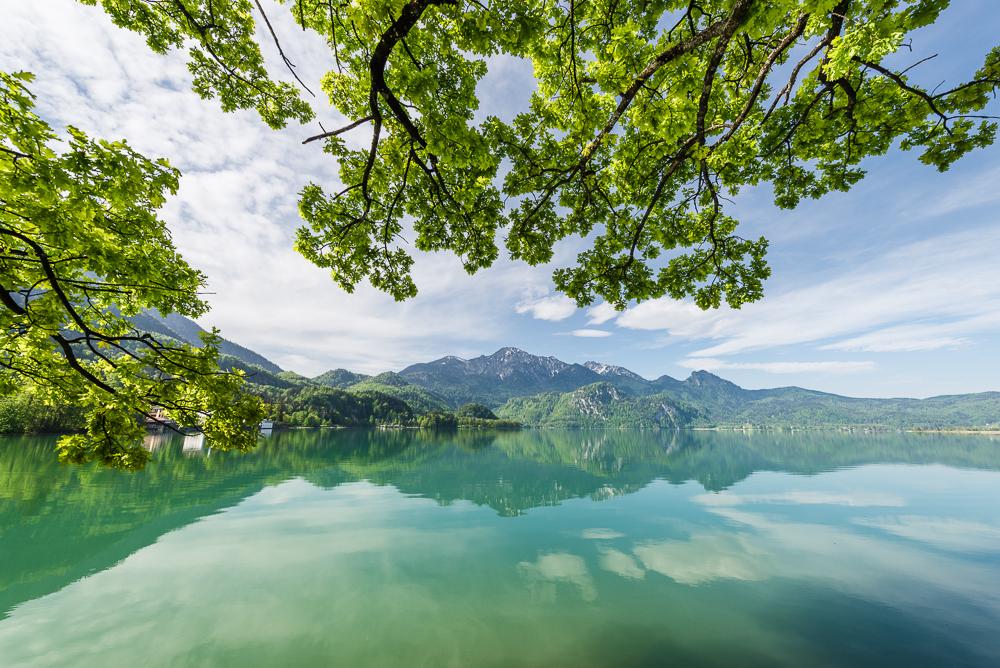 Leuchtend grünes Blätterdach der Bäume über dem Panorama von Kochelsee und Herzogstand, Bayern, Deutschland