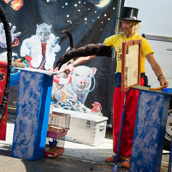 Zirkus Liberta - eine Katze springt durch eine Zeitung