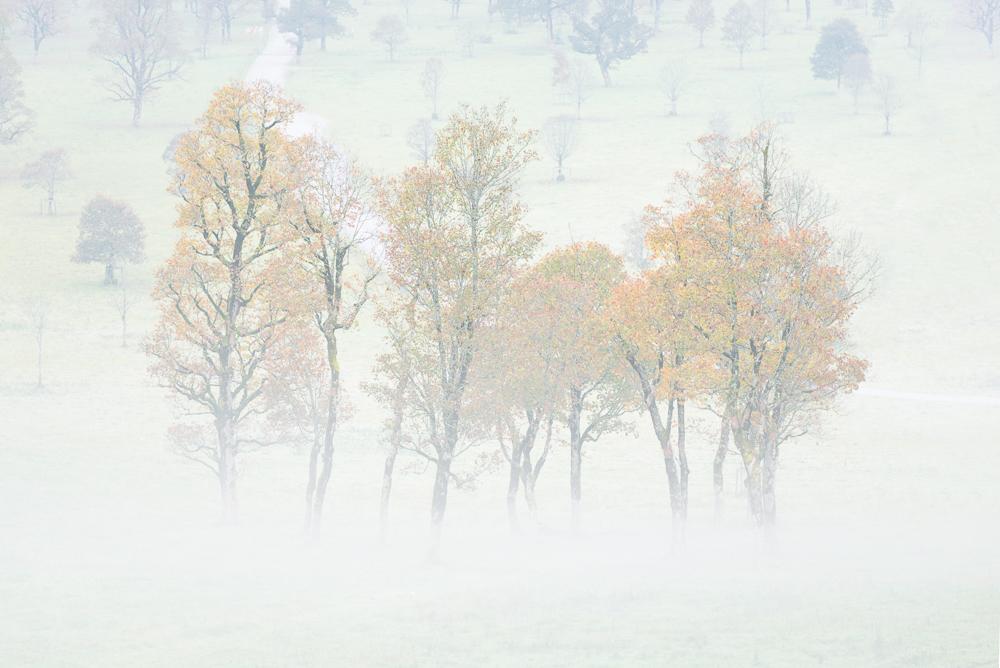 Herbstlich gefärbte Ahornbäume im Nebel auf dem großen Ahornboden im Karwendel Gebirge, Tirol, Österreich