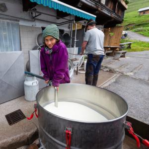Frische Kuhmilch wird von einem Mädchen aus einer Tonne in die Käserei abgepumpt, Ackernalm, Tirol, Österreich