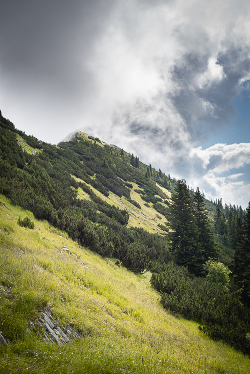 Blick über Bergwiesen und Latschenkiefern am Blaubergkamm auf den Gipfel der Halserspitz, Tirol, Österreich