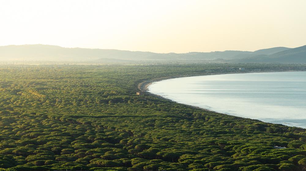 Sandstrand und Pinienhain an der Küste der Toskana südlich von Castiglione della Pescaia bei Sonnenaufgang