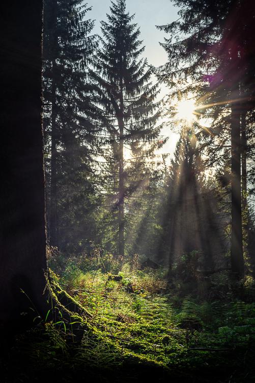 Morgensonne scheint in den dunklen Bergwald nahe der Talalm, Chiemgauer Berge, Bayern, Deutschland