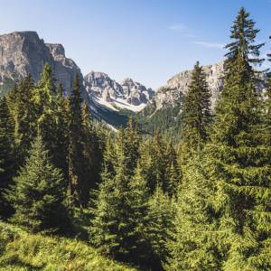 Blick durch Bergwald in des Zwischenkofeltal in der Puez-Geisler-Gruppe der Dolomiten, Campilltal, Südtirol, Italien